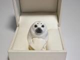 Кольцо в виде животных: обзор модели, полезные советы